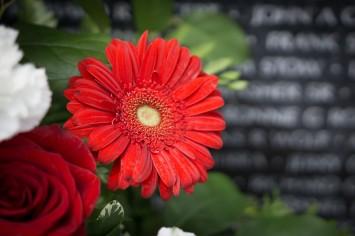 red-flower-at-national-memorial.jpg